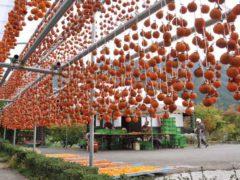 「巻柿の里にて」 写坊 様(2011年10月)