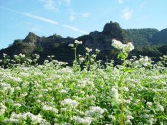 「そばの花と古羅漢」 ひこうき雲 様(2011年12月)
