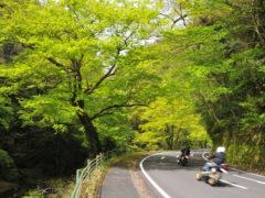 「新緑の深耶馬渓路」 写坊 様(2013年4月)