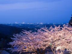 「八面山公園 桜ライトアップ」 瀬戸間 博 様(2015年4月)