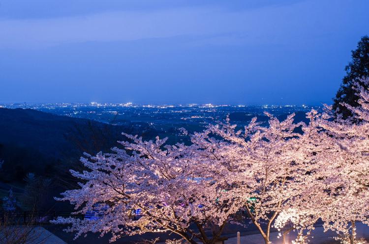 「八面山公園 桜ライトアップ」 瀬戸間 博 様