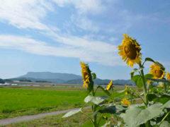 「八面山を仰ぐ」 youyou 様(2015年8月)