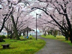 「大貞公園桜並木」 城 英光 様(2017年4月)