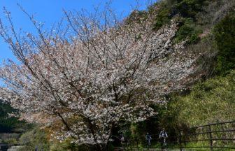 サイクリングロード(春)