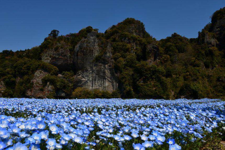 青の洞門とネモフィラ