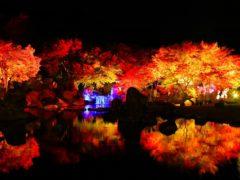 溪石園(秋のライトアップ)