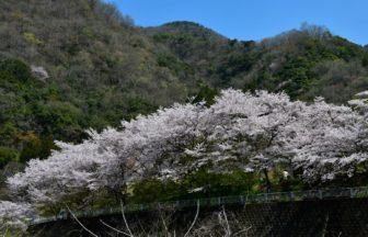 溪石園(春)