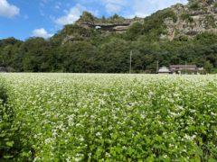 そばの花畑(本耶馬渓)